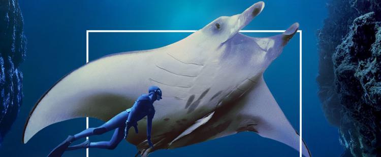 immersion-expo-interactive-musee-oceanographique-monaco