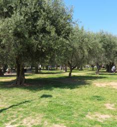 parc-arenes-cimiez-nice-vacances-famille