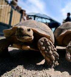 ile-tortues-musee-oceanographique-monaco
