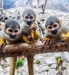parc-loisirs-animalier-monaco-jardin-zoo