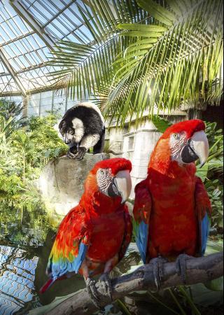 parcs-phoenix-nice-animaux-jardins-enfants