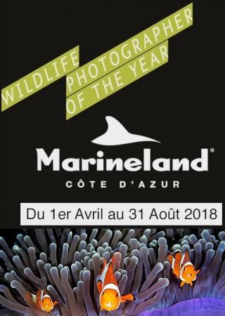 marineland-exposition-photo-wildlife-photographer-year